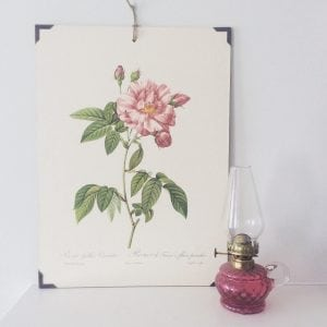 Beautiful original vintage rose print
