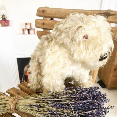 Adorable vintage toy dog