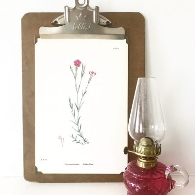 Wonderful mounted vintage botanical print #3