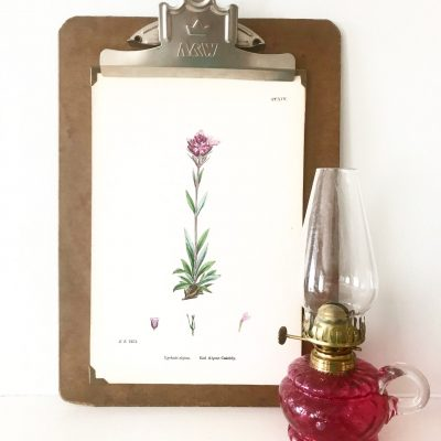 Wonderful mounted vintage botanical print #2