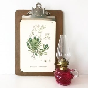 Wonderful mounted vintage botanical print